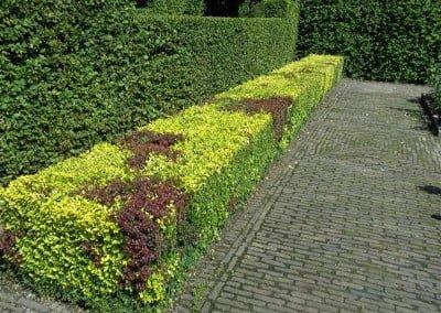 Hagen knippen tuinonderhoud Hoveniersbedrijf Robert Sterk Hilversum -  (1)