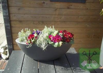 Tuinbloeiers, violen en bollen
