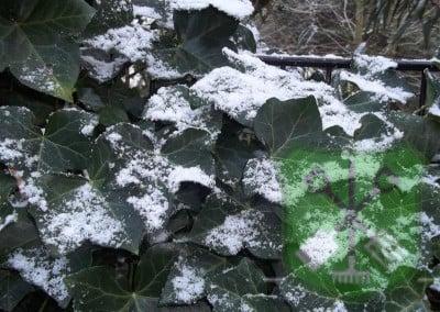 Winterbeeld Hoveniersbedrijf Robert Sterk Hilversum - oa Tuinaanleg Tuinonderhoud Tuinontwerp  (1)