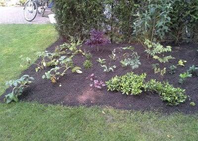 Beplanting - tuinaanleg Hoveniersbedrijf Robert Sterk Hilversum - oa Tuinaanleg Tuinonderhoud Tuinontwerp  (107)