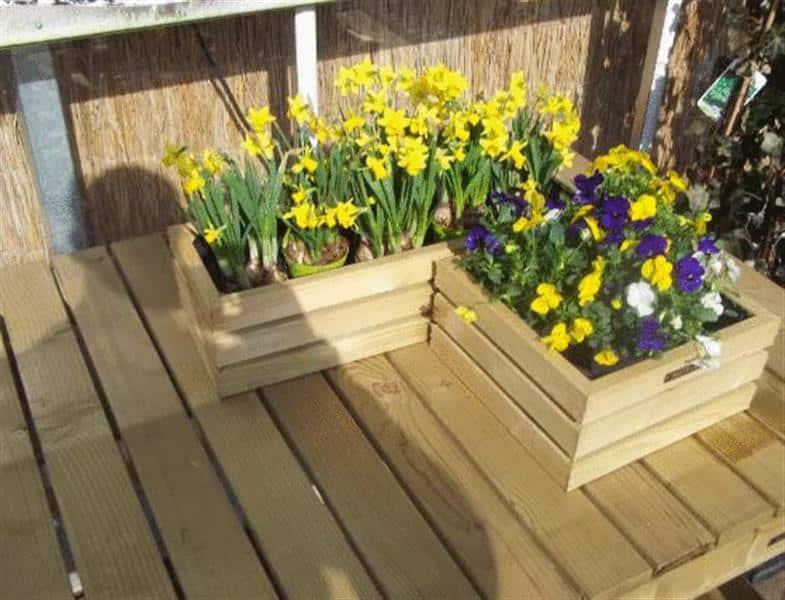 Bollen Bloeiend Voorjaar : Tuinbloeiers violen en bollen hoveniersbedrijf robert sterk
